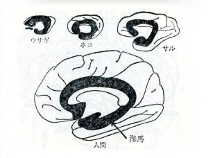 brain-32