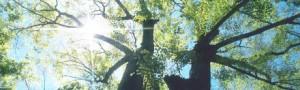 tt_tree
