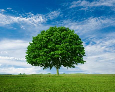tree_s