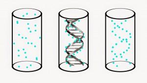 DNAfantom